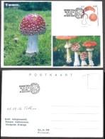 Estonian Mushrooms - Fly Agaric 2016 Estonia Stamp Private Maxicard RARE - Champignons