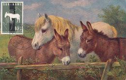 D25685 CARTE MAXIMUM CARD 1963 SURINAM - DONKEY ÂNE COMMUN CP ORIGINAL