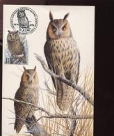 Belgie Buzin Vogels Birds 2808 Maximumkaart RR Brussel 22/2/1999 - 2001-2010