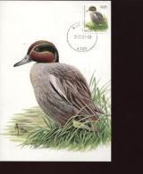 Belgie Buzin Vogels Birds 3623 Maximumkaart RR Waremme 26/2/2007 - 1985-.. Oiseaux (Buzin)