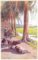 SAGONE. - Cochons Sur La Route. Superbe Carte Illustrée Par EVEN En 1906.  Editions JDC - France