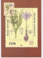 DDR-1982-Plantes Toxiques-6 Cartes Maximum - Toxic Plants