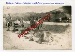PRIESTERWALD-Bois Le Pretre-Cadavres-Chevaux D'une Ambulance-Infirmiers-CHIENS-CARTE PHOTO All.-Guerre 14-18-1 WK-France - Oorlog 1914-18
