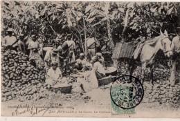 Les Antilles , Le Cacao , Le Concassement - Martinique