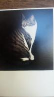 CPM CHAT CAT MAX OLIEVERF OP DOEK DICK ZWIER 1979 ART UNLIMITED - Gatti