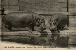 ANIMAUX - 75 - PARIS - Jardin Des Plantes - ZOO - HIPPOPOTAME - Hippopotames