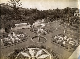 Portugal Açores Sao Miguel Ponta Delgada Jardins Du Comte Botelho Ancienne Photo Raposo 1890