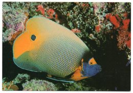 MALDIVES ISLANDS - FRANCOROSSO / FISH / THEMATIC STAMP-TOURISM / WINDSURFING - Maldive