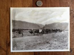 Photographie Ancienne De Photographe Connu Numéro 55 Lehnert Et Landrock - Fotos