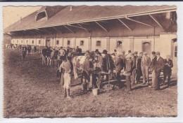 Posieux, Grangeneuve. Ecole D´agriculture. La Vacherie Et Le Marquage Des Bêtes Au Concours. No 20 - FR Fribourg