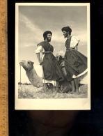 MAROC : Sud Marocain : Méharistes Et Chameau / Camel - Marocco