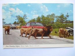 """CPSM """"Lion Country Safari - West Palm Beach - Florida"""" - Palm Beach"""