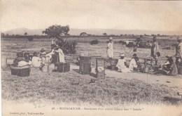 MADAGASCAR BOURJANES D'UN CONVOI FAISANT LEUR SAKAFO AFRIQUE - Madagascar