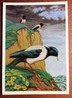 Retro Russian USSR Postcard  1984 By Egorov. Bird Pink Starling On A Rock - Uccelli