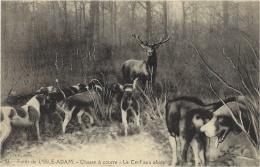 CERF - CHIEN - Forêt De L´ ISLE-ADAM (95) - CHASSE À COURRE - Le CERF Aux Abois - DEER HUNTING - Hunting