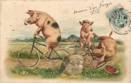 COCHONS - Chute à Vélo,carte 1900 Illustrée. - Cochons