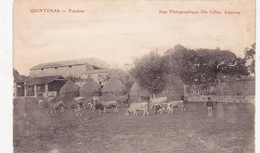 CPA Animée (07) QUINTENAS Frachon Paysan Gardeur De Vaches Bovin - Altri Comuni