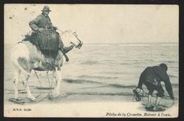 +++ CPA - Pêche De La Crevette - Retour à L'eau - Cheval - D.V.D. 10535 - Cachet Furnes 1905  // - Veurne