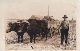 GREAT RPPC TEAM OF OXEN PULLING A WAGON FULL OF COAL - Andere Thema's