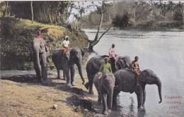 CEYLON ELEPHANTS CROSSING RIVER SRI LANKA ASIE - Sri Lanka (Ceylon)