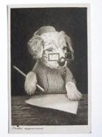 Dog  Chien  Hund / Old Postcard - Cani