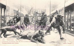 31 - TOULOUSE - Museum D'Histoire Naturelle - Fauves Et Gorilles - Dos Vierge Précurseur - 2 Scans - Toulouse