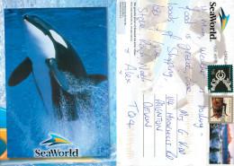 Shamu The Killer Whale, SeaWorld, Florida, United States US Postcard Posted 2012 Stamp - Orlando