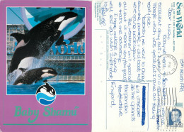 Baby Shamu The Killer Whale, SeaWorld, Florida, United States US Postcard Posted 1993 Stamp - Orlando