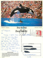 Shamu The Killer Whale, SeaWorld, Florida, United States US Postcard Posted 1987 Stamp - Orlando
