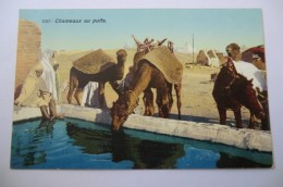 CPA TUNISIE TUNIS LEHNERT ET LANDROCK. Chameaux Au Puits. - Tunisie