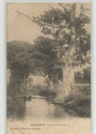 CPA  GUADELOUPE - Le Canal Du Lamentin  C241 - Pointe A Pitre