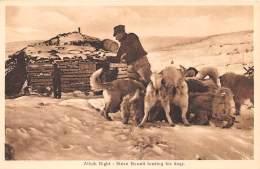 ATTELAGE DE CHIEN - CANADA - Newfoundland - Steve Newell Feeding His Dogs  - Chiens De Traineaux - Canada