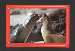 ANIMALS - ANIMAUX - GALAPAGOS ECUADOR SUD AMERICA - RARE SPECIES OF SEA SEALS - WONDERFUL STAMP - Animaux & Faune
