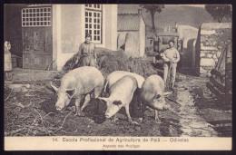 Alunos POCILGAS PORCOS. ESCOLA PROFISSIONAL De AGRICULTURA PAIÃ - ODIVELAS. Postal (Lisboa) PORTUGAL - Lisboa