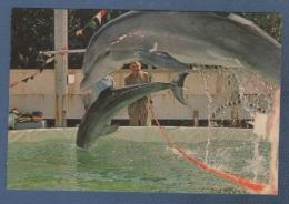 CP ANIMEE LES CELEBRES DAUPHINS DE JEAN RICHARD ET DU CAPITAINE RICHARD DECKER - MONACHROME BEAUSOLEIL N° 4 - Dauphins