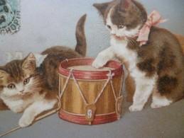 CPA Chat Musiciens Tambour  Un  Pli - Katten