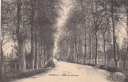 G , Cp , 24 , RIBÉRAC , Allée Des Platanes - Riberac