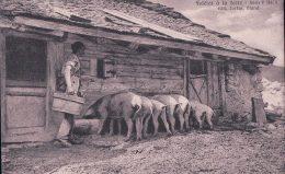 Scènes Paysannes, Cochons Et Chalets, Fidèles à La Terre. Publicité LACTAS GLAND (P 1) - Elevage