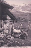 Scènes Paysannes, Chalet,  Petit Chevrier Et Chèvres, Fidèles à La Terre. Publicité LACTAS GLAND (C 6) - Elevage