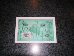 CARTE MAXIMUM CARD BELGIQUE BELGIUM Solidarité Zoo D´ Anvers Antwerpen Poissons Poisson Scorpion 1472 Bonnevalle 1968 - Cartes-maximum (CM)