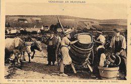 Vendanges En Beaujolais, Du Pur Jus De Raisin, Du Vin Bien Fruité - La Feuillette - Edition Combier - Weinberge