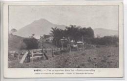 BRESIL - Une Concession Dans Les Colonies Nouvelles - Brésil