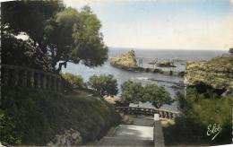 64 BIARRITZ DESCENTE DANS LES TAMARIS AU FOND LE ROCHER DE LA VIERGE - Biarritz
