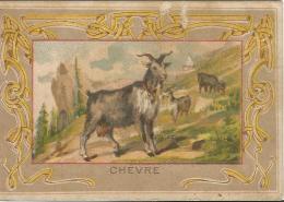 CHROMO  -  CHEVRE  -  AU DOS TEXTE  HISTOIRE NATURELLE  1er Série -  H&C. - Animales