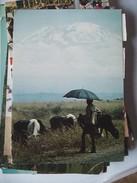 Tanzania Man With Cattle And Kilimanjaro - Tanzania