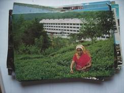 Asia Sri Lanka Ceylon Tea Plucker Woman - Sri Lanka (Ceylon)