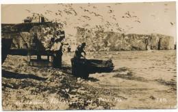PERCE  - Carte Photo - Birds And Fishermens - Percé