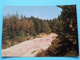 EPELAAR ( Ed. Daneels ) Anno 19?? ( Zie Foto Voor Details ) !! - Beerse