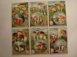 Liebig - Champignons Comestibles - Série S.631 -1900 - Série De 6 Chromos En TBE - Ed. Belge - (lot 206-2) - Liebig