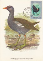 SAINTE LUCIE Carte Maximum - Gallinula Chloropus - St.Lucie (1979-...)